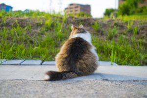 猫(外にいる)