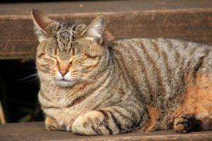猫(縁側で寝てる)