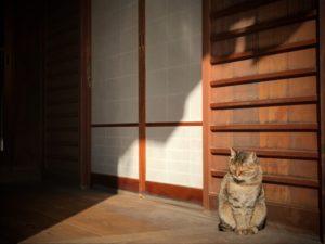 猫(縁側にいる)